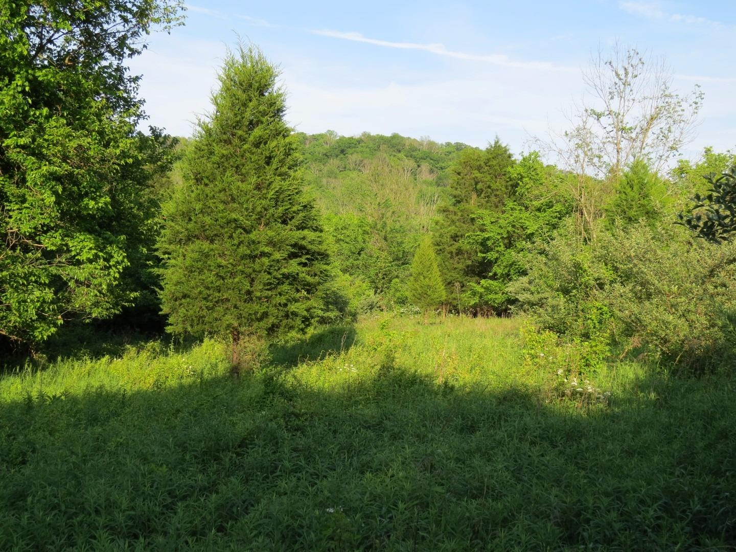 50ac Plum Creek Rd