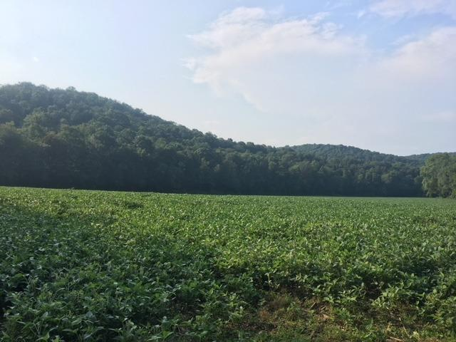 95.99ac Morgan Fork Rd Pike County, OH