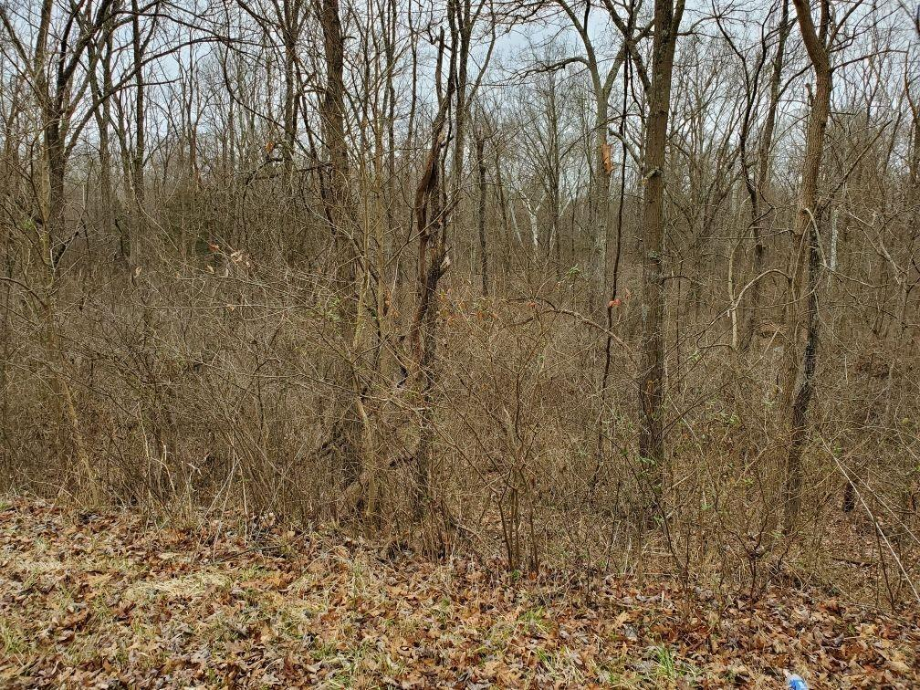 Photo 3 for 0 155.4ac Bailey Chapel Rd Pike County, OH 45661