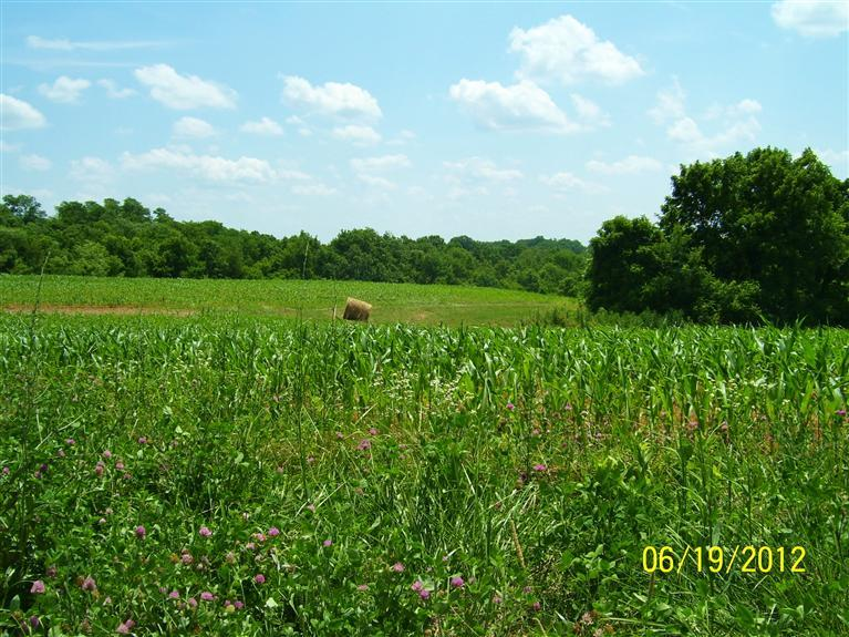 real estate photo 1 for 198.56ac Needham Ln Dry Ridge, KY 41035