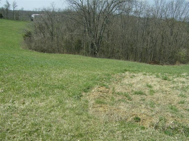real estate photo 1 for 190 Mini Farms Rd Brooksville, KY 41004