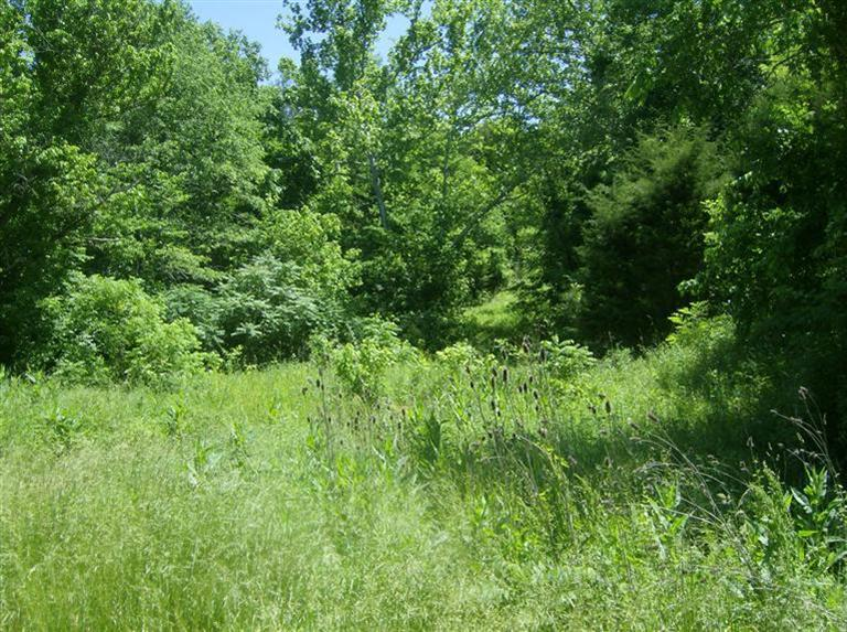 real estate photo 1 for Hwy 1159 Brooksville, KY 41004