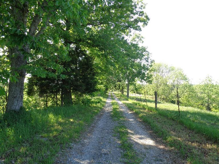 real estate photo 1 for 5591 Lenoxburg Rd Falmouth, KY 41040