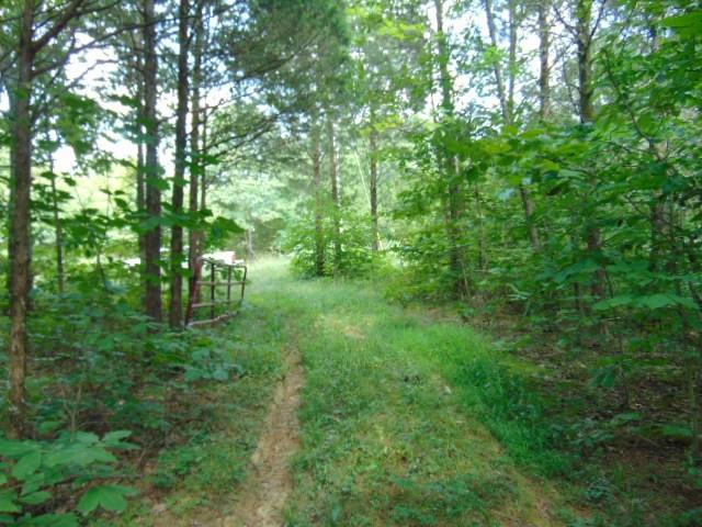 Fox Trail