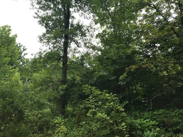 Photo 3 for Heathen Ridge Crittenden, KY 41030
