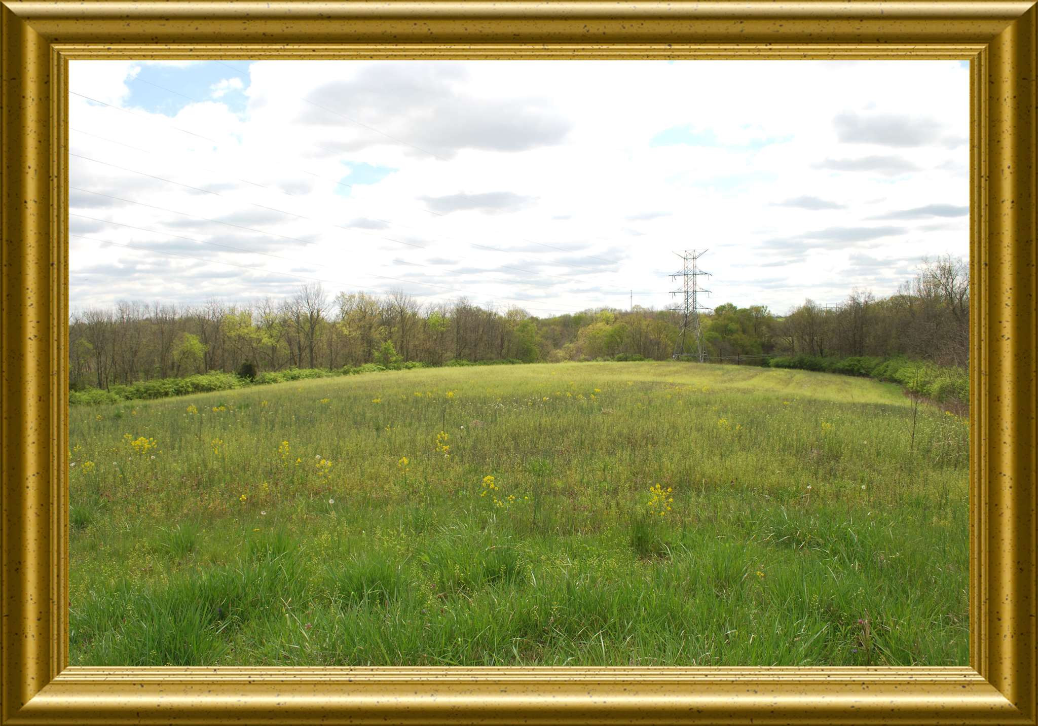 195 acres Germantown Rd (RT 3056) Maysville, KY